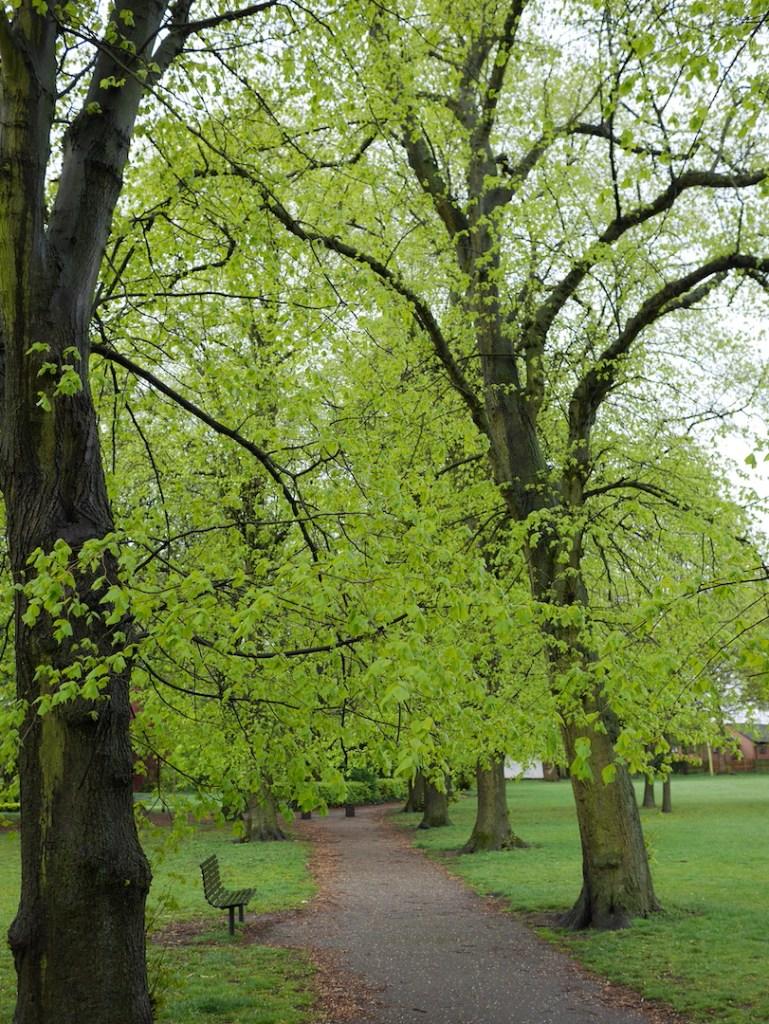 tree following avenue