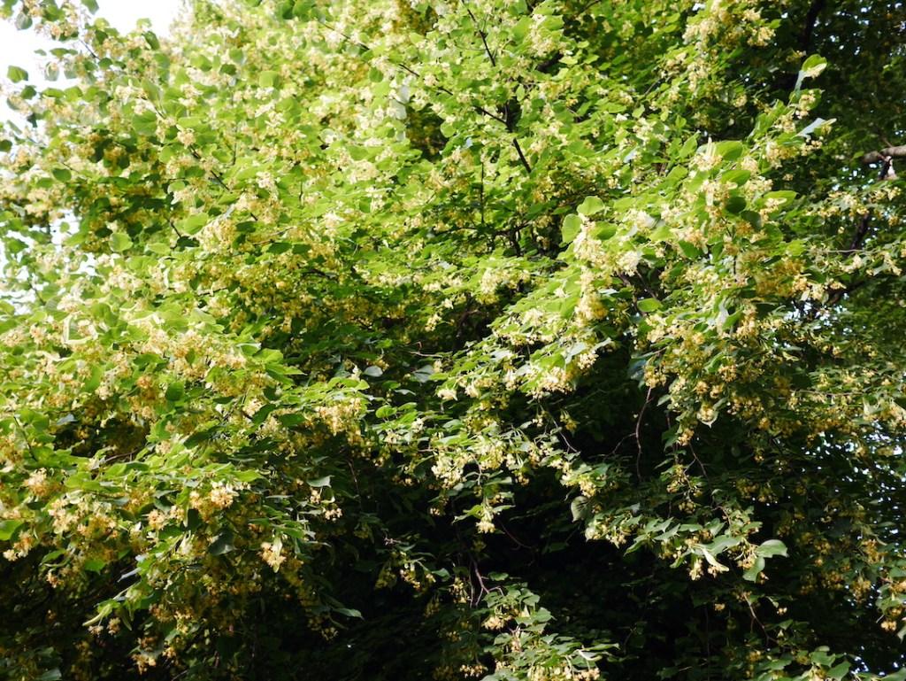 Tree following flowers