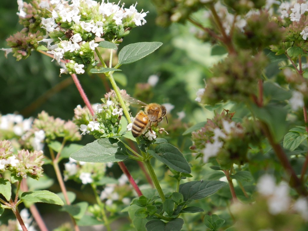Six on Saturday honeybee