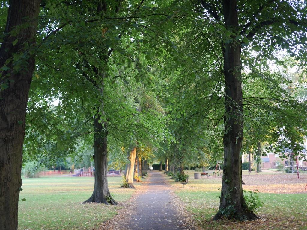 Tree Following Avenue Lime Trees