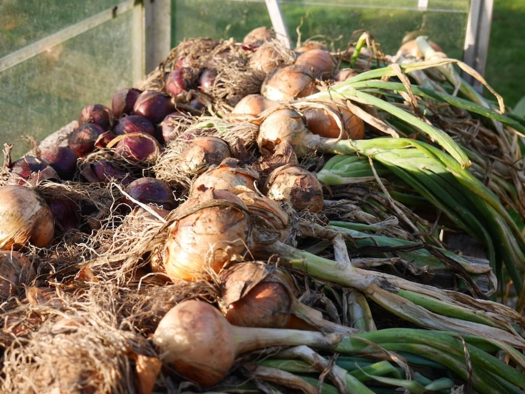 onions six on saturday