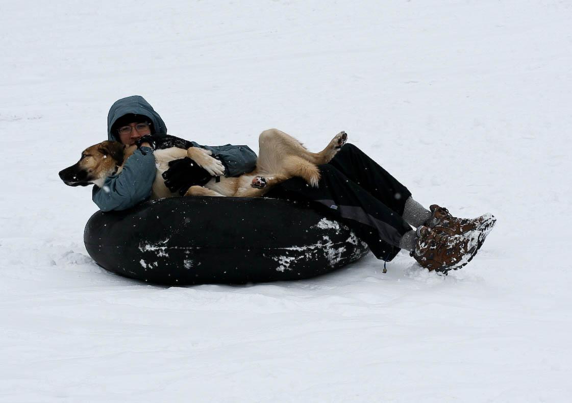 snow-sledding-dog