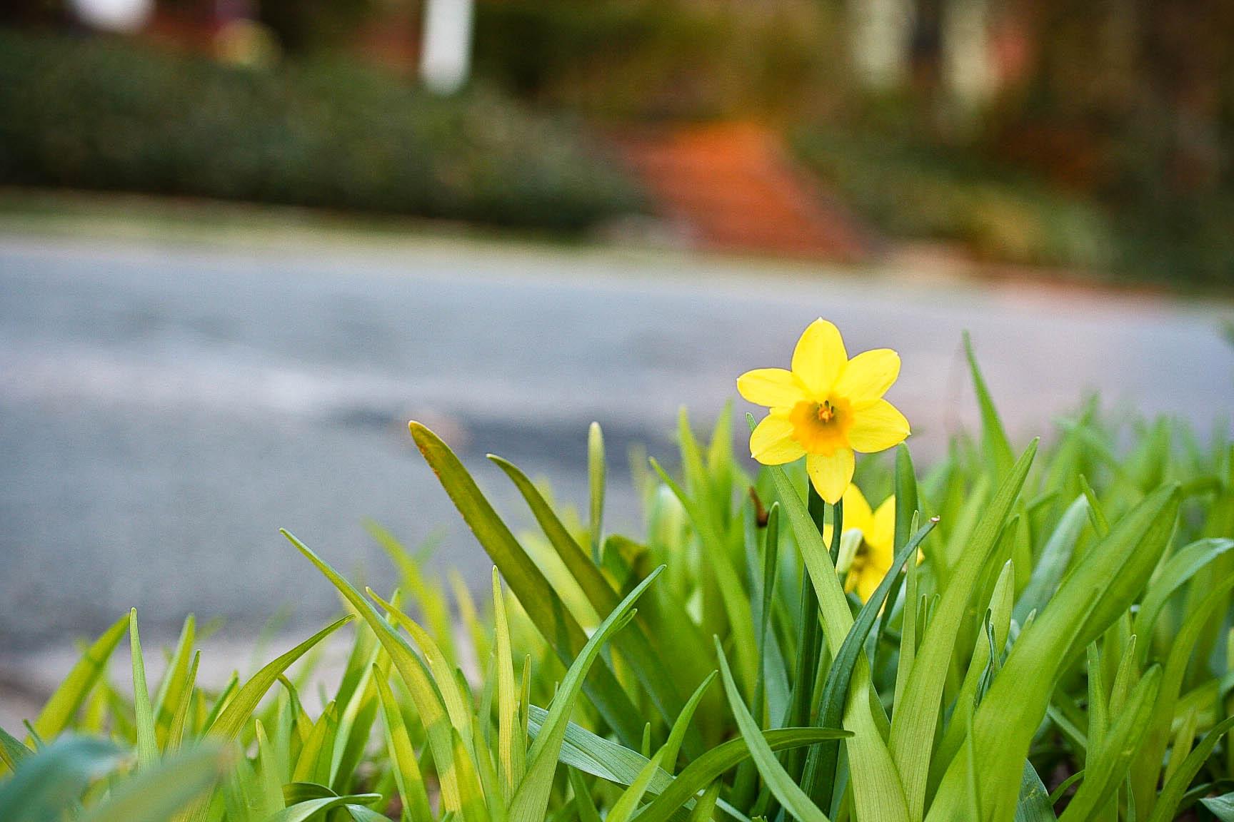 the-hopefull-flower