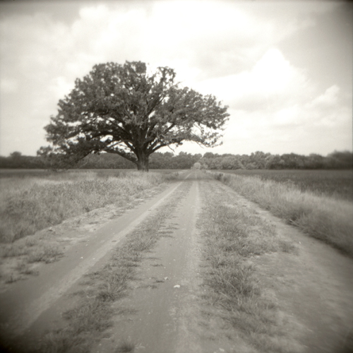 kansas tree dirt road holga