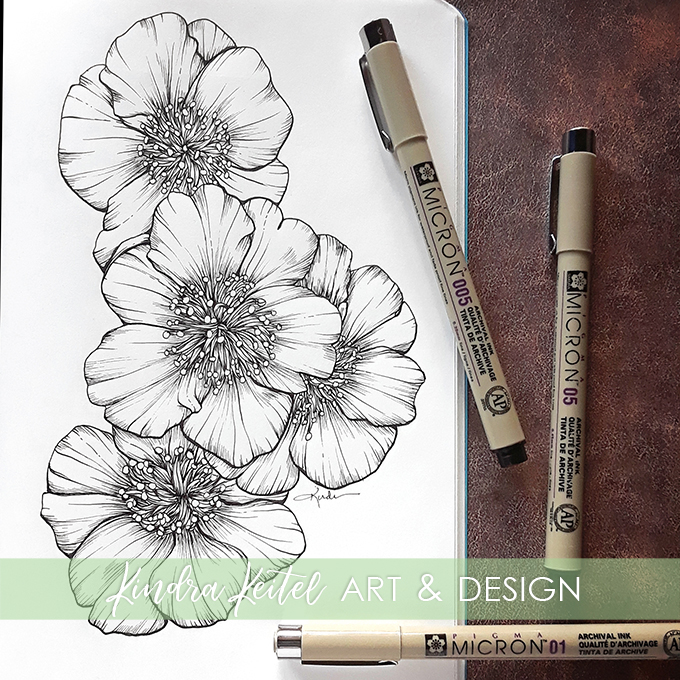 camellia botanical illustration