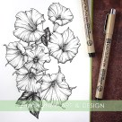 jimson weed botanical illustration