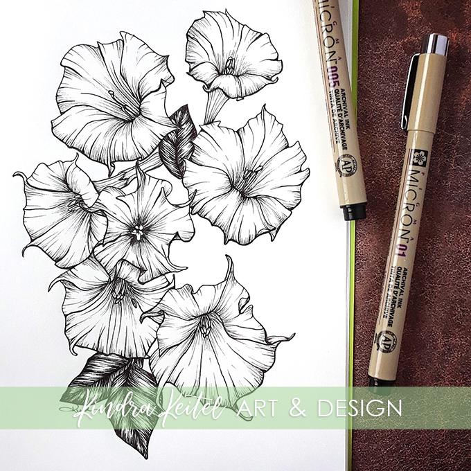 jimson weed botanical illustration