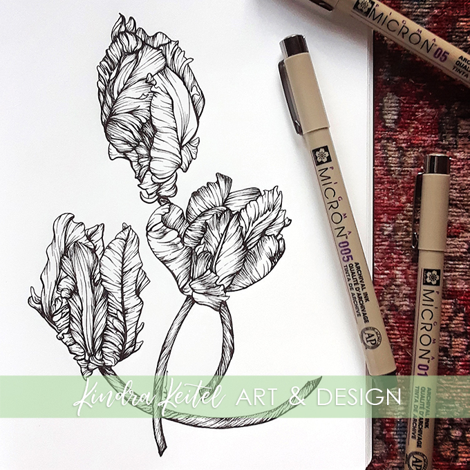 parrot tulip botanical illustration