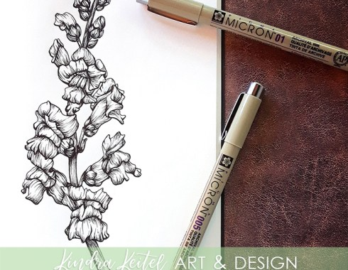 snapdragon botanical illustration