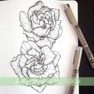 gardenia botanical illustration