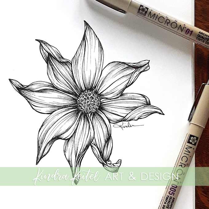 dahlia botanical illustration