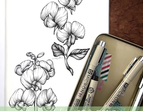 sweet pea botanical illustration
