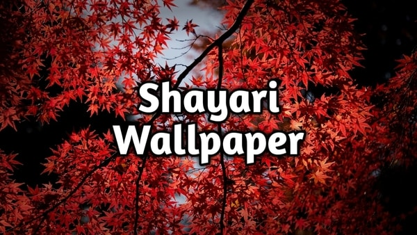 Love Shayari Wallpaper Full HD Download Hindi | शायरी वॉलपेपर