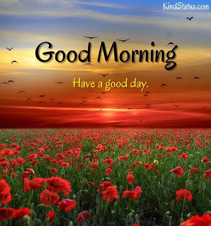 good morning  (2)