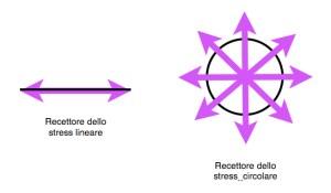 RECETTORI DELLO STRESS