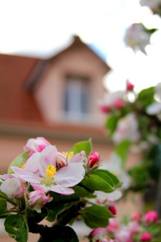 Vue du cabinet depuis le jardin fleuri