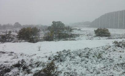 多摩11月の雪