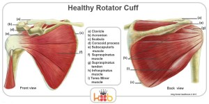 King Brand Healthy Rotator Cuff Back and Front View