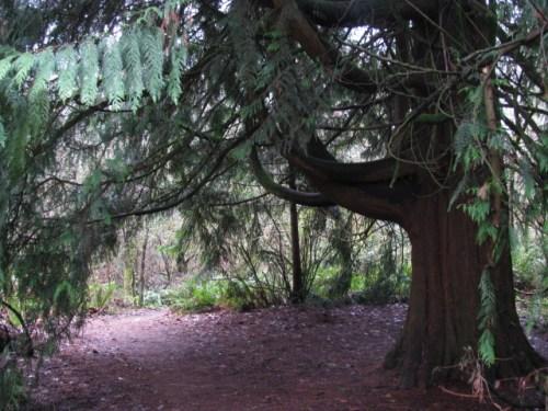Under the trees in Big Finn Hill Park