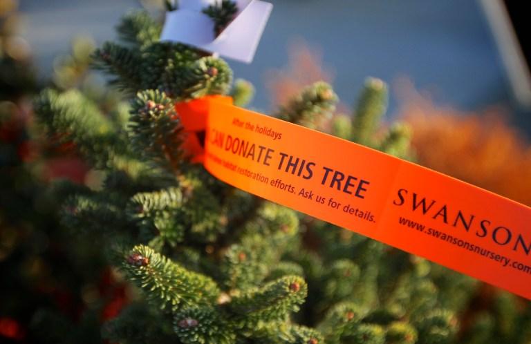 Swansons Nursery Living Christmas Tree Program
