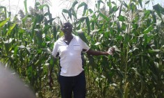 Brother Mose in the maize field