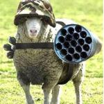 battle_sheep