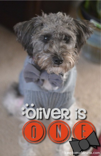 Oliver is ONE! photo 2