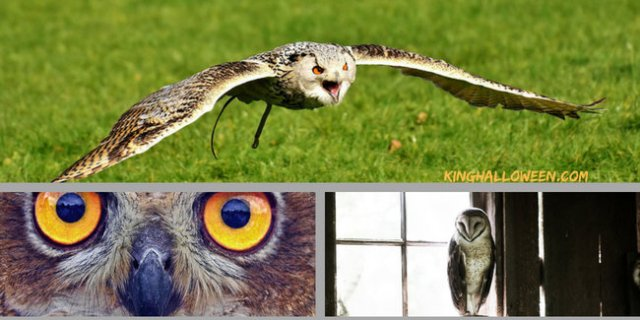 Owl Superstition Imagery