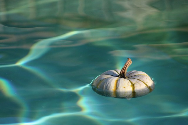 fun facts about pumpkins-they float