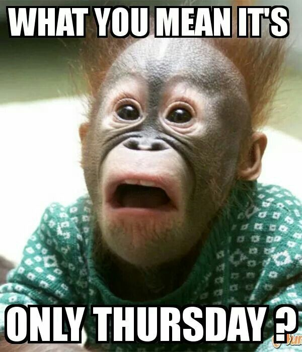 Pic of a Monkey depicting Thursday humour