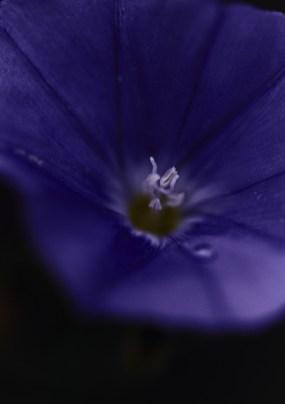 Flowers_LA_Shot2_32