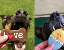 Puppies Love Our Dog Treats!