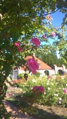the gardens at Biltmore Estate