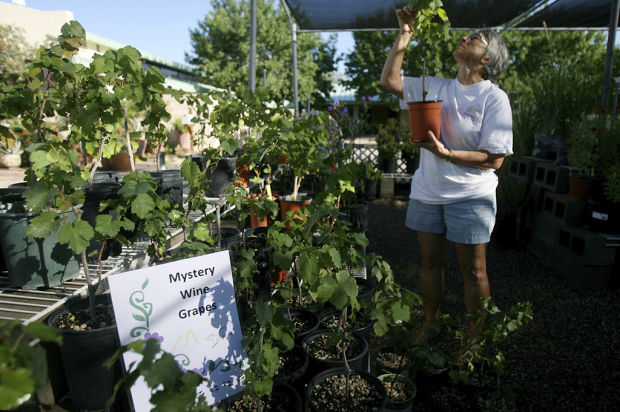 kingman-merchants-mall-master-gardeners