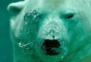 Kingman Events - The Polar Bear Plunge