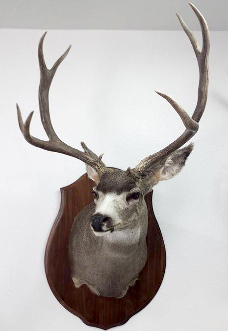 Down-Mount-Taxidermy-Taxidermist-Kingman-AZ-5