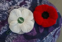 red and white poppy side by side