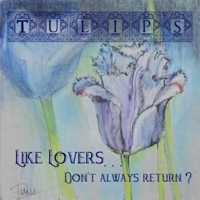 Tulips, like lovers don't always return