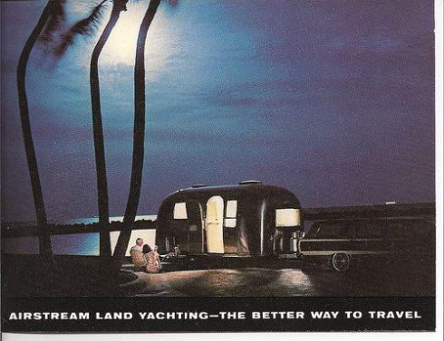 Airstream palm tree