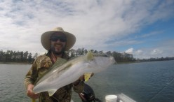 Flats kingfish. Sight fishing with salt water fly in shallow water, great fun.