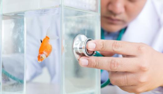 金魚の病気 症状別トラブルシューティング