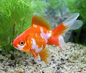 小型水槽での金魚飼育に適したフィルターベスト3
