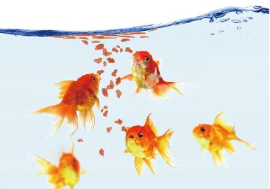 金魚の餌選びのポイント