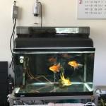 金魚を長生きさせるために絶対に買うべきアイテム