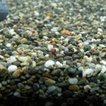 金魚水槽には砂利は必要なのか?底床を考える