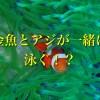 金魚とニモが泳ぐ水槽がすぐそこに