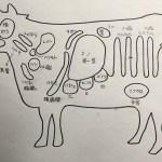 牛肉・牛ホルモンの部位一覧 部位を知れば美味しさ倍増?