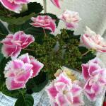 風水でお勧めできる観葉植物を教えて下さい。