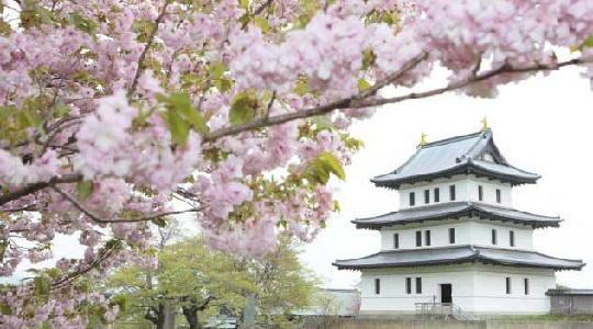 ゴールデンウィークに北海道旅行に行くなら松前公園の桜も多いようですね