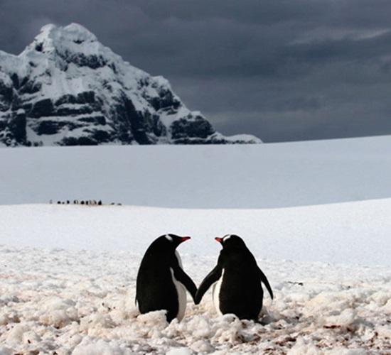 動物 ペンギン
